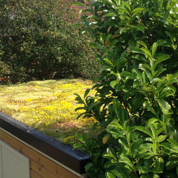 Dreaming of a living roof? Here's what you need to know