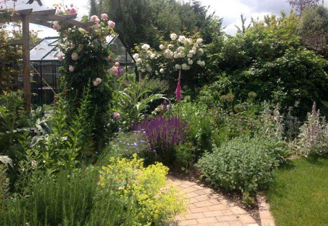 Amersham Garden one year after planting