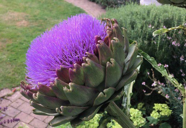Summer border planting in Amersham Garden