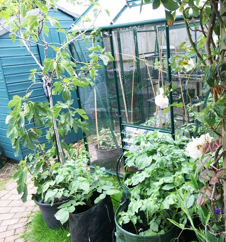 Growing fruit and vegetables in a small space