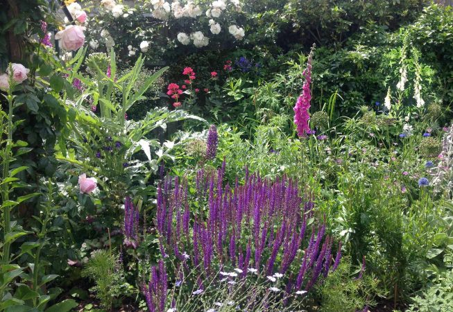 Planting design - cottage garden style - roses, salvias, foxgloves in soft pastel colours