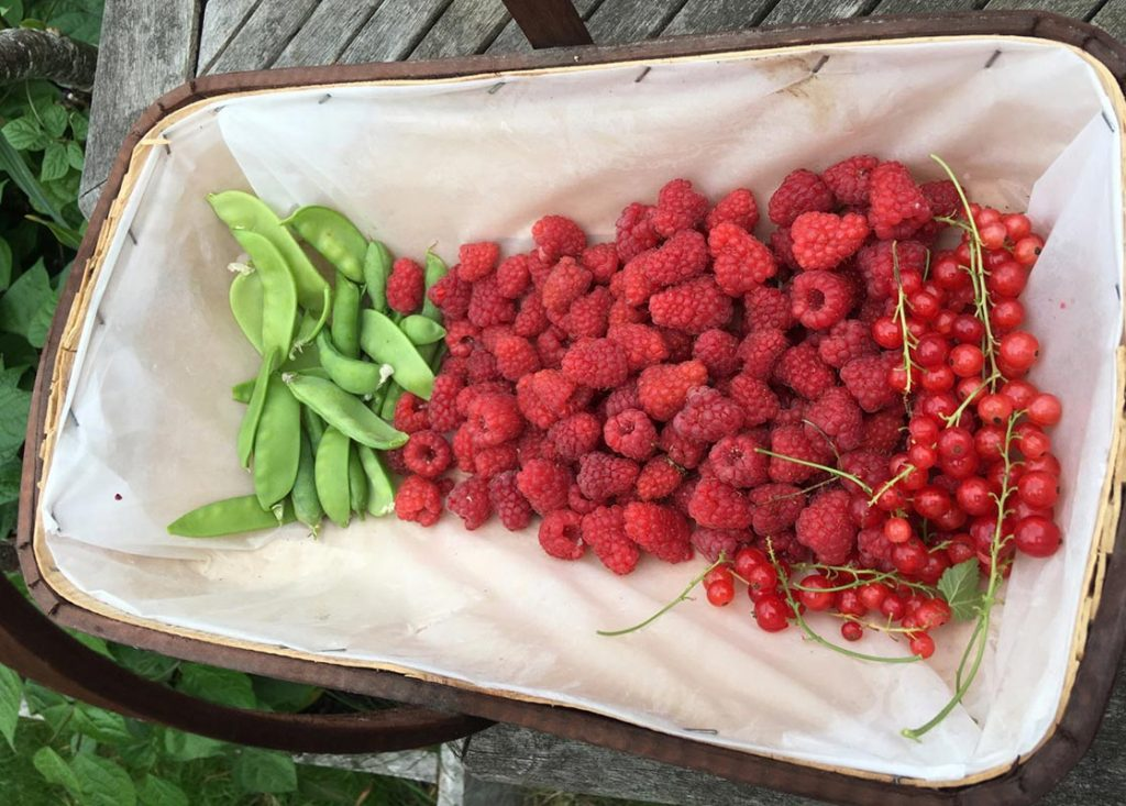 A trug full of raspberries is a daily delight all summer long