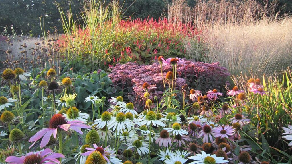 Sussex Prairie Garden Late Summer
