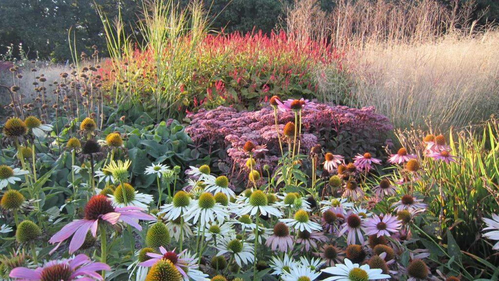 Sussex Prairie Garden Late Summer