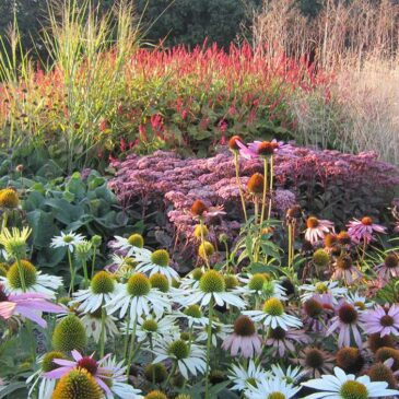 Garden inspiration for autumn